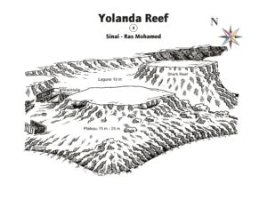 Shark-Yolanda Reef verzaubert alle Taucher