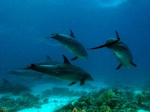 Delfin-Schule