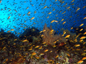 Riff mit Fischen