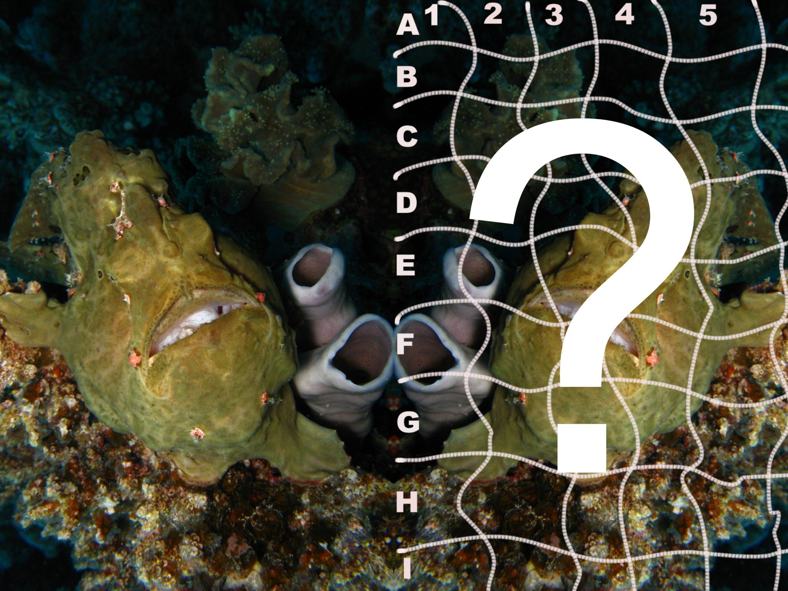 Frogfish Rätselbild