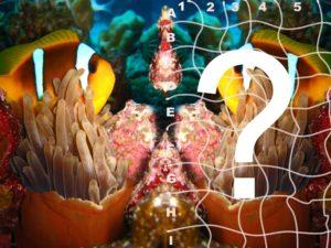 Quiz-Anemonenfisch