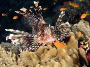Ab in den Norden, auf zum Carless Reef