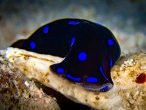 Unterwasser-Nacktschnecke