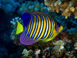 Fische und Korallen in voller Farbenpracht