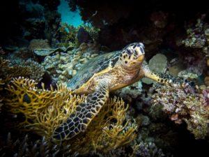 Turtle Day und gemütliche Tauchgänge