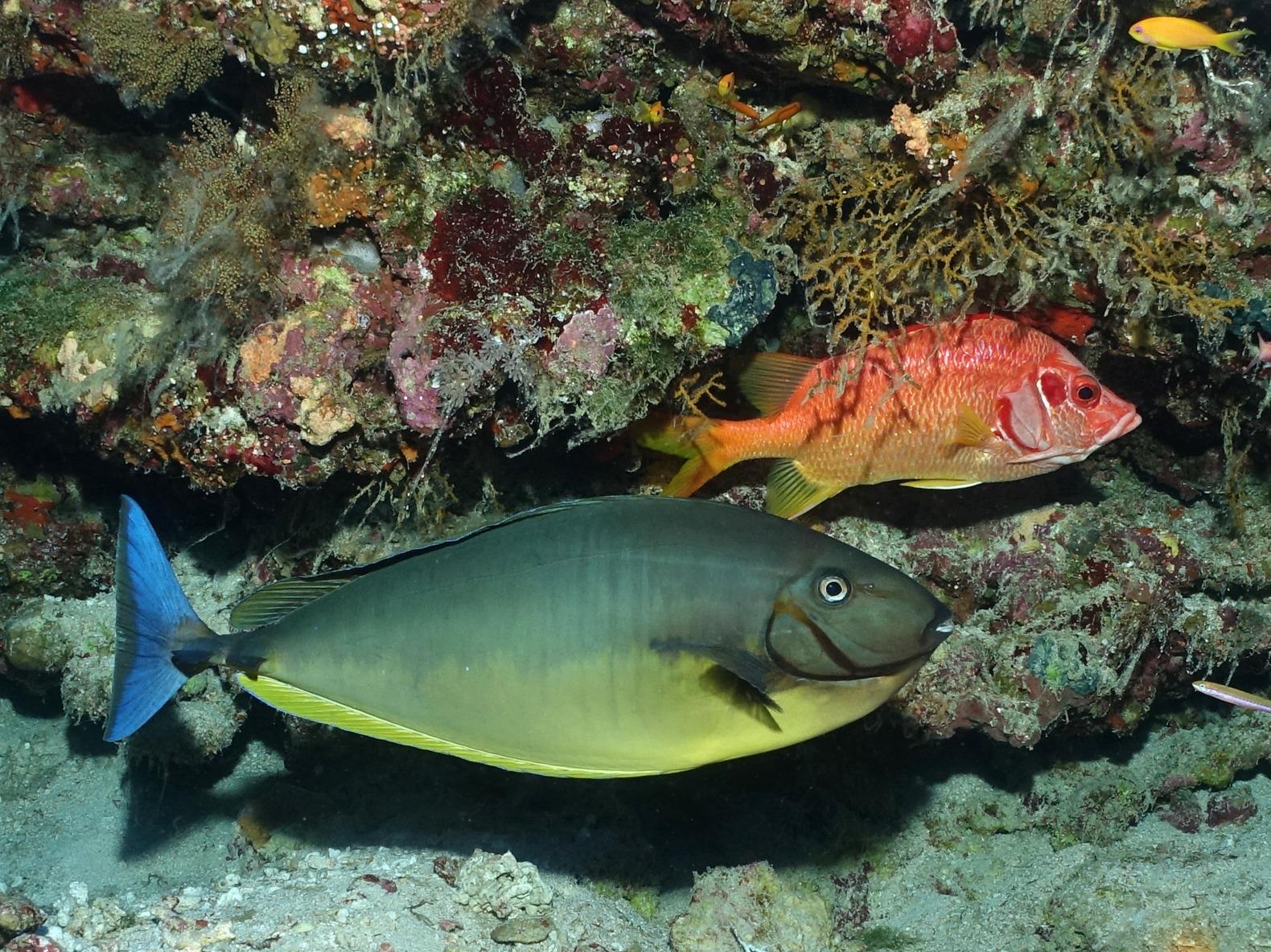Bunte Fische