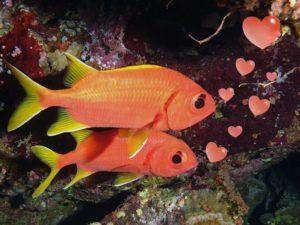 Fischpaar