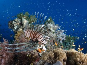 Ein Fotoshooting im Korallengarten
