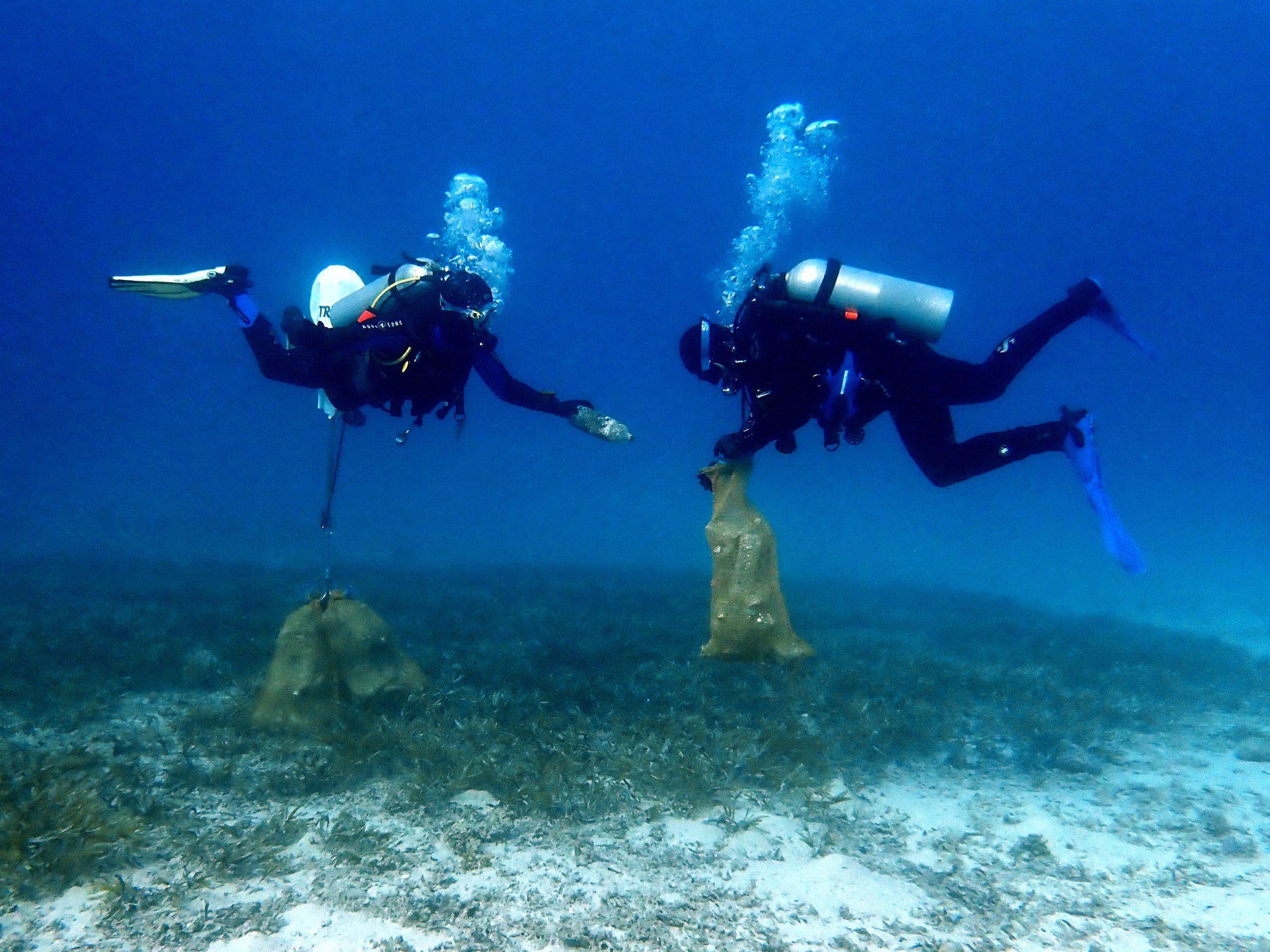 Clean Up Dive