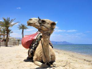 Rückblick Kamel