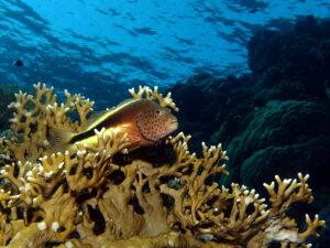 Mit entspannter Geschwindigkeit am Riff