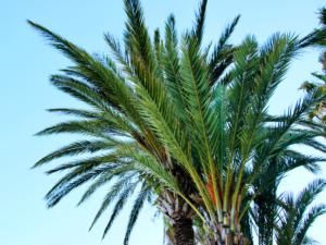 Überblick Woche Palmen
