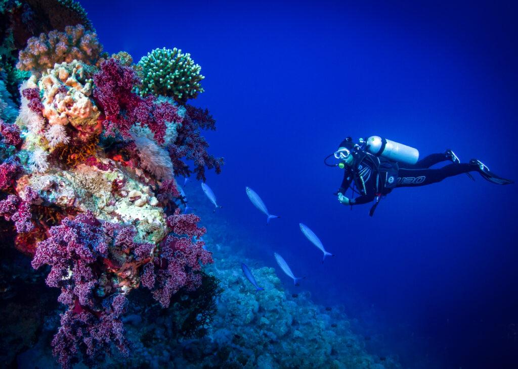 Korallen-Taucher