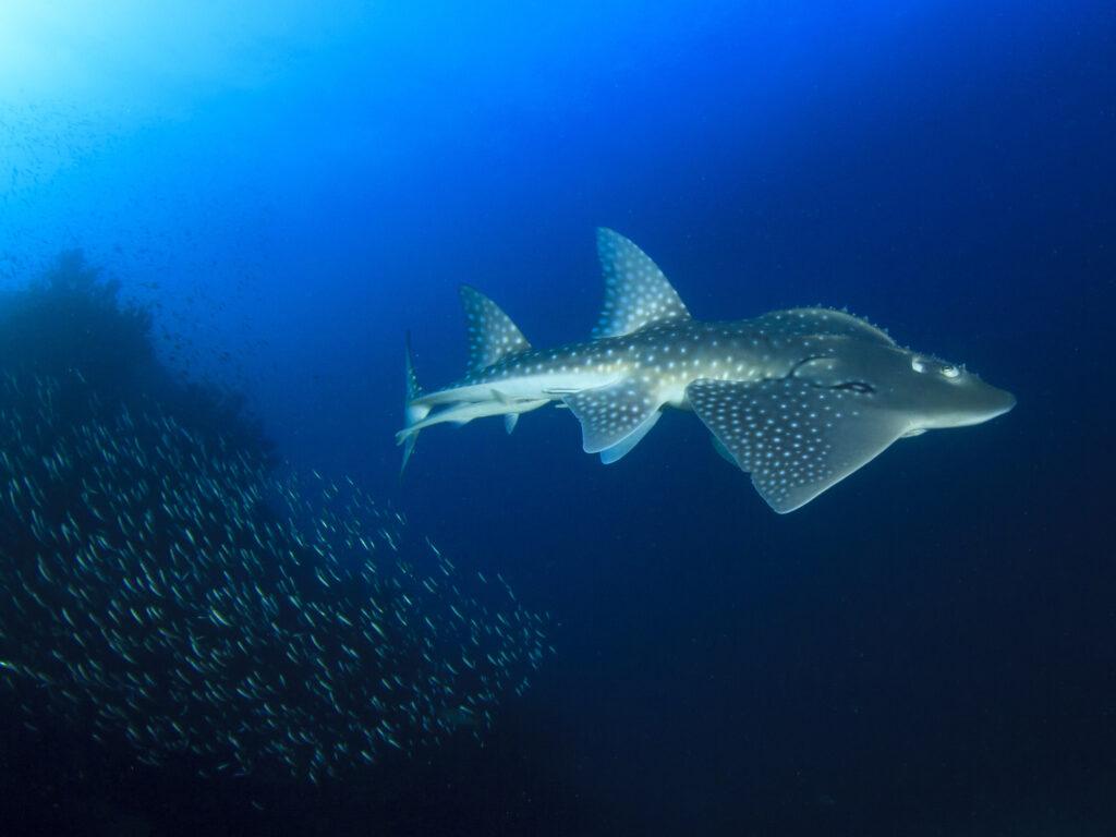 News vom Roten Meer: Die letzte Woche