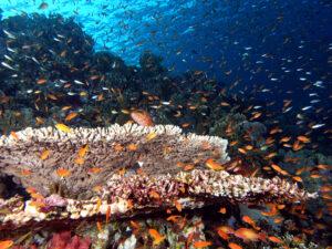 Herbststimmung im Roten Meer