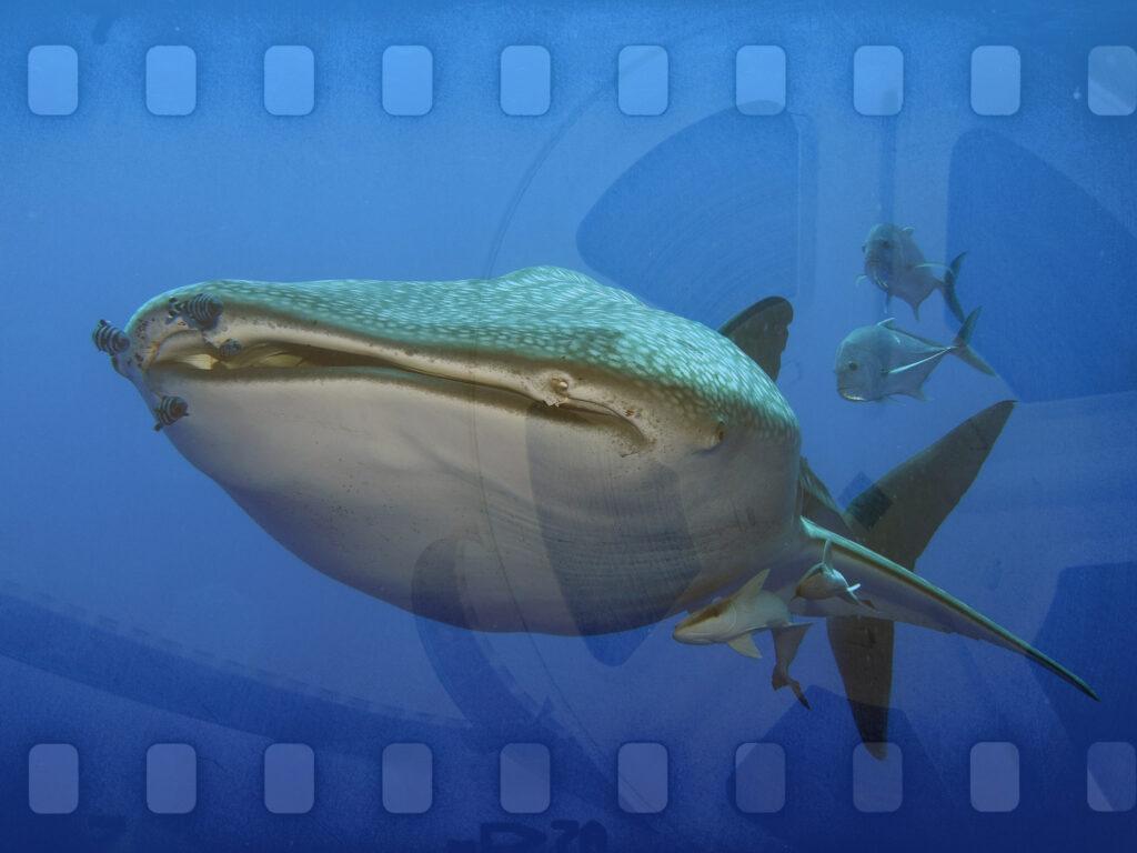 Videowettbewerb: Schönstes Unterwasservideo