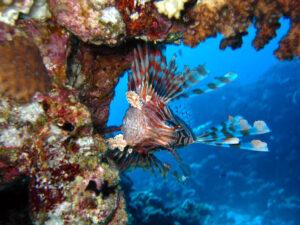 Unterwasserwelt begeistert den OWD Kurs