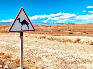 Schild Kamele Verboten