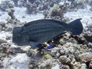 Eibn sportlicher Tauchtag mit Fischvielfalt
