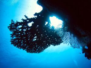 Fische und Korallen gucken auf Bayrisch