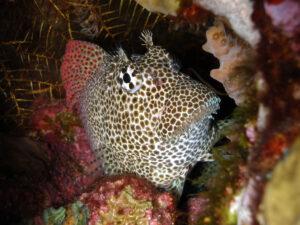 Viele großartige Kleinigkeiten am Riff